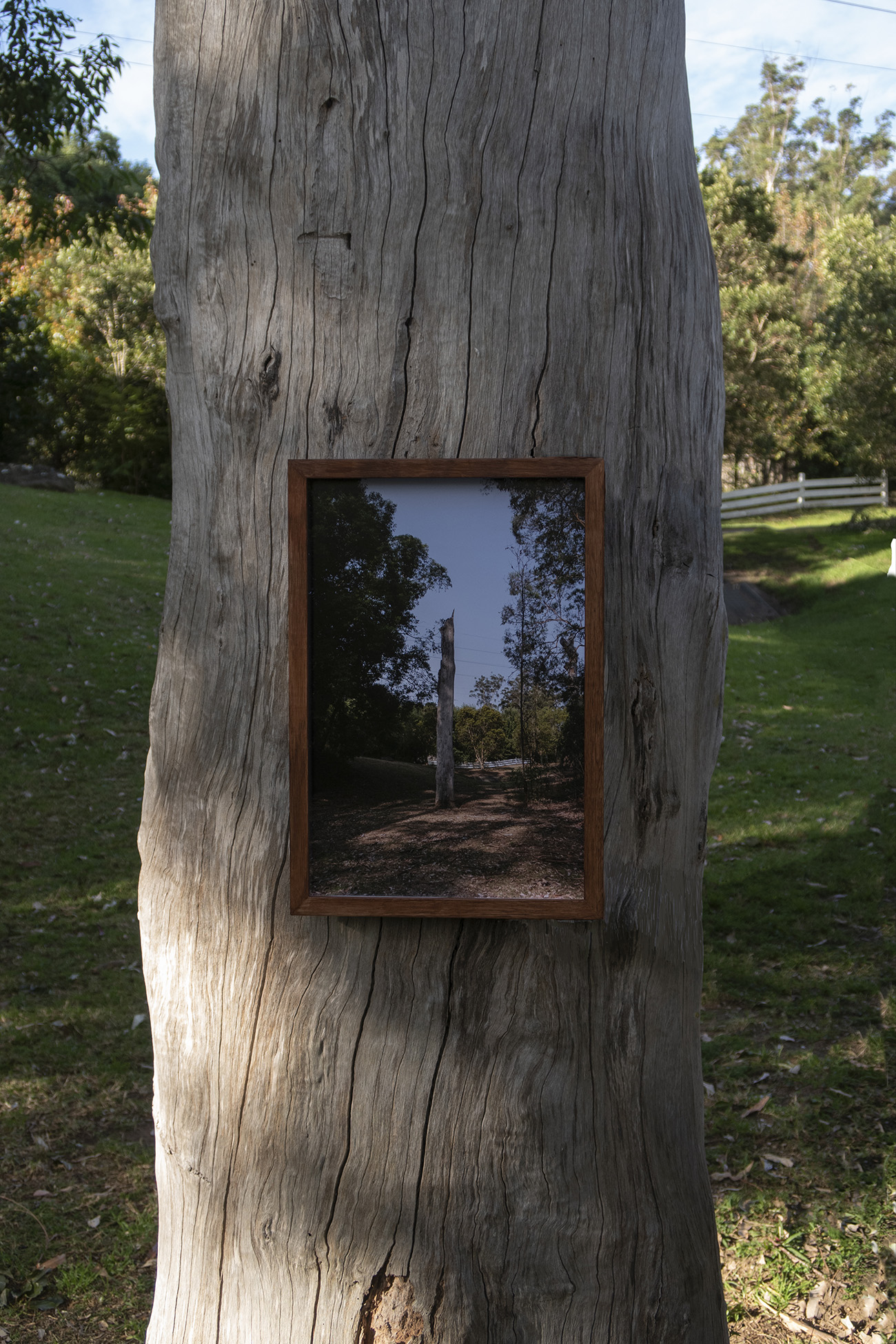 Framed picture of tree hung on tree.