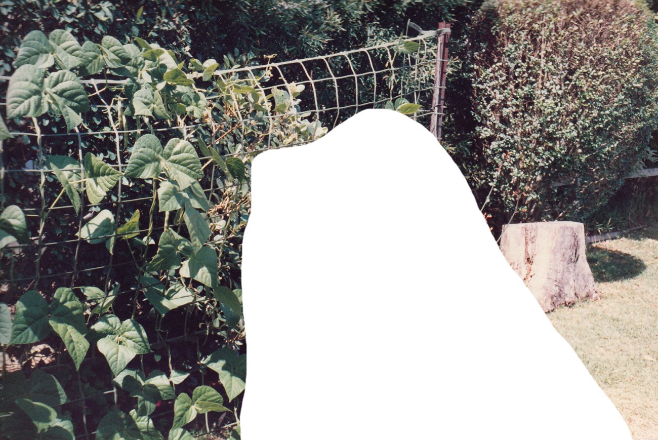 Cutting from photo showing veggie garden