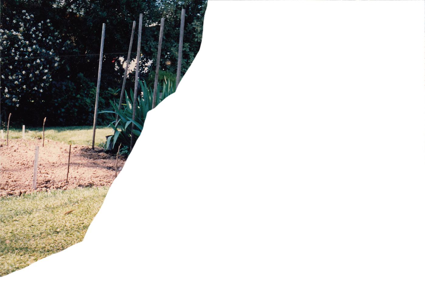 Cutting from photo showing veggie garden