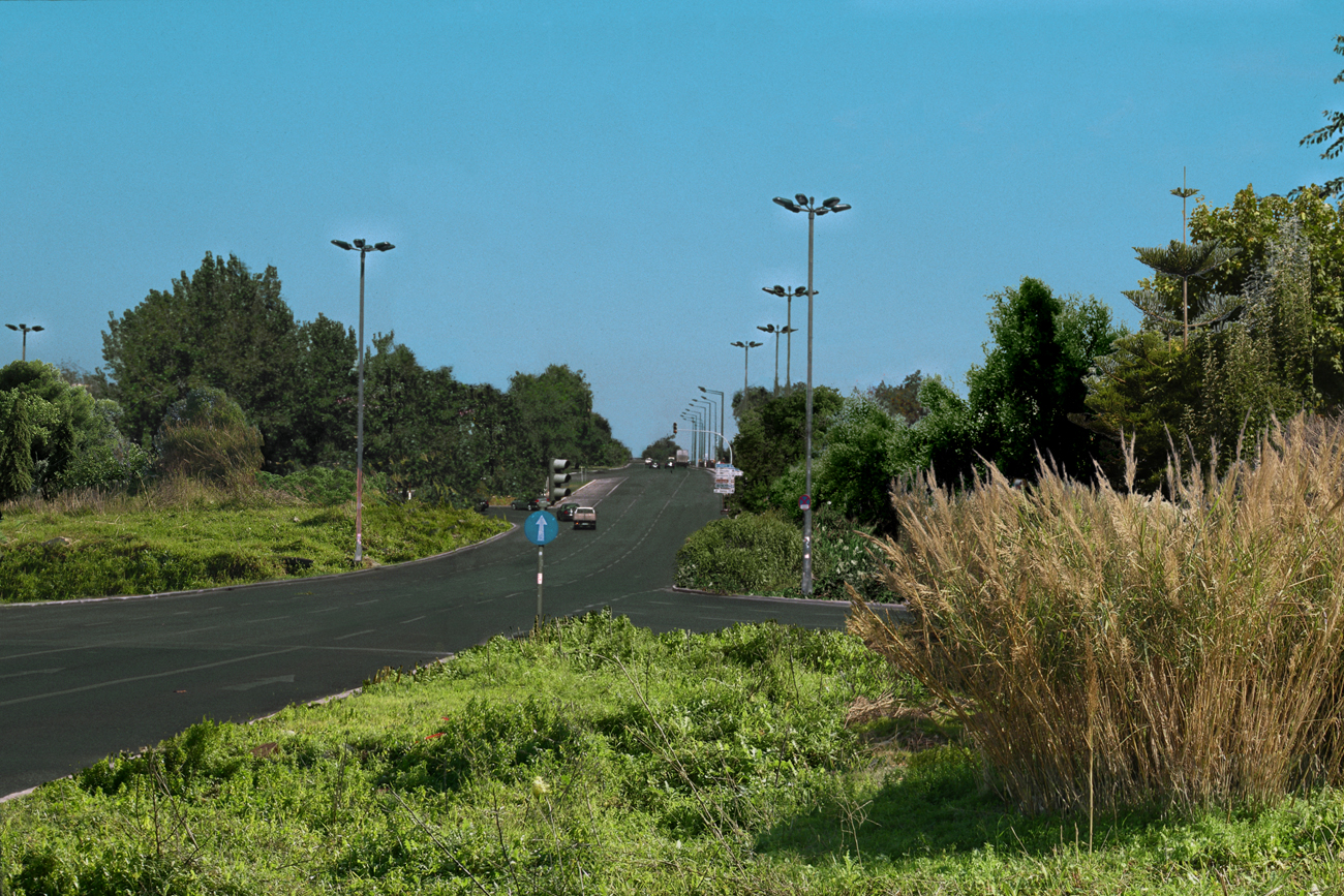landscape with road and abundant vegetation