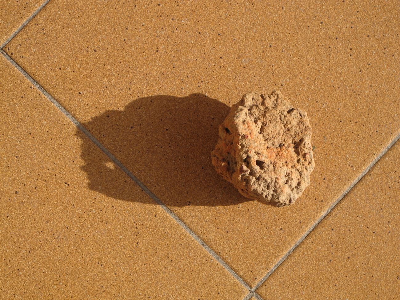 densely perforated piece of sandstone