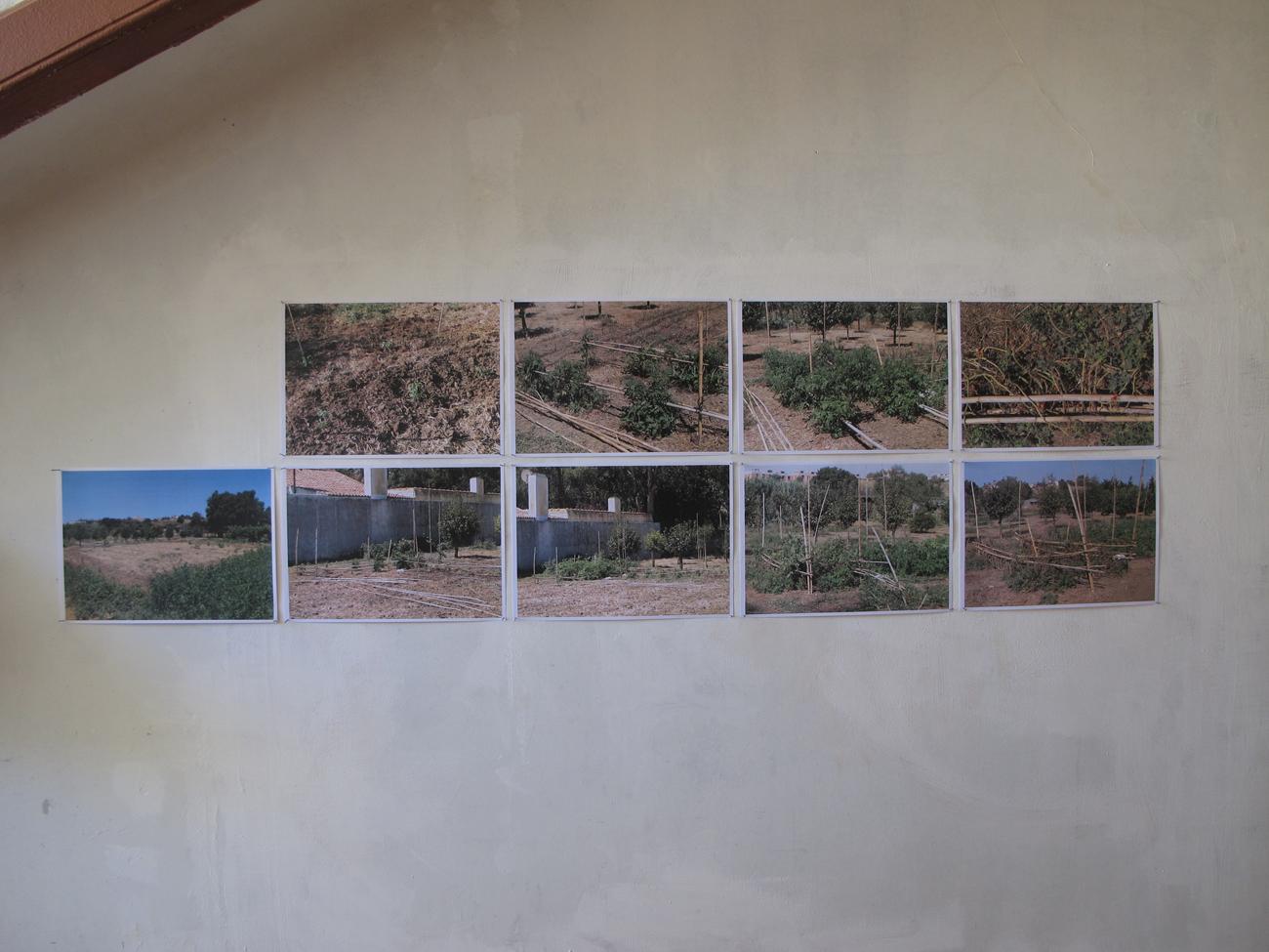 photos of veggie plot on wall