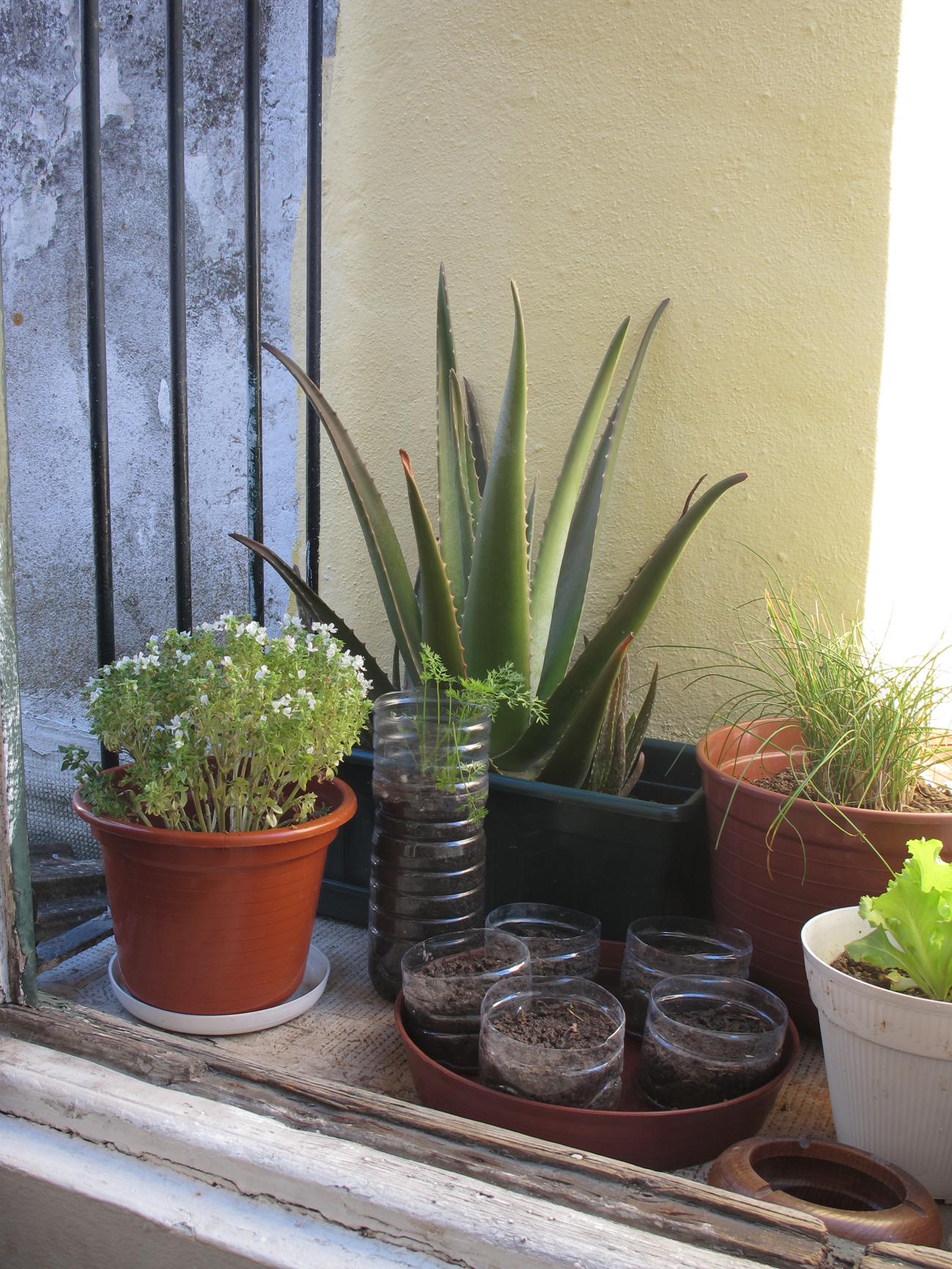 plants in veranda