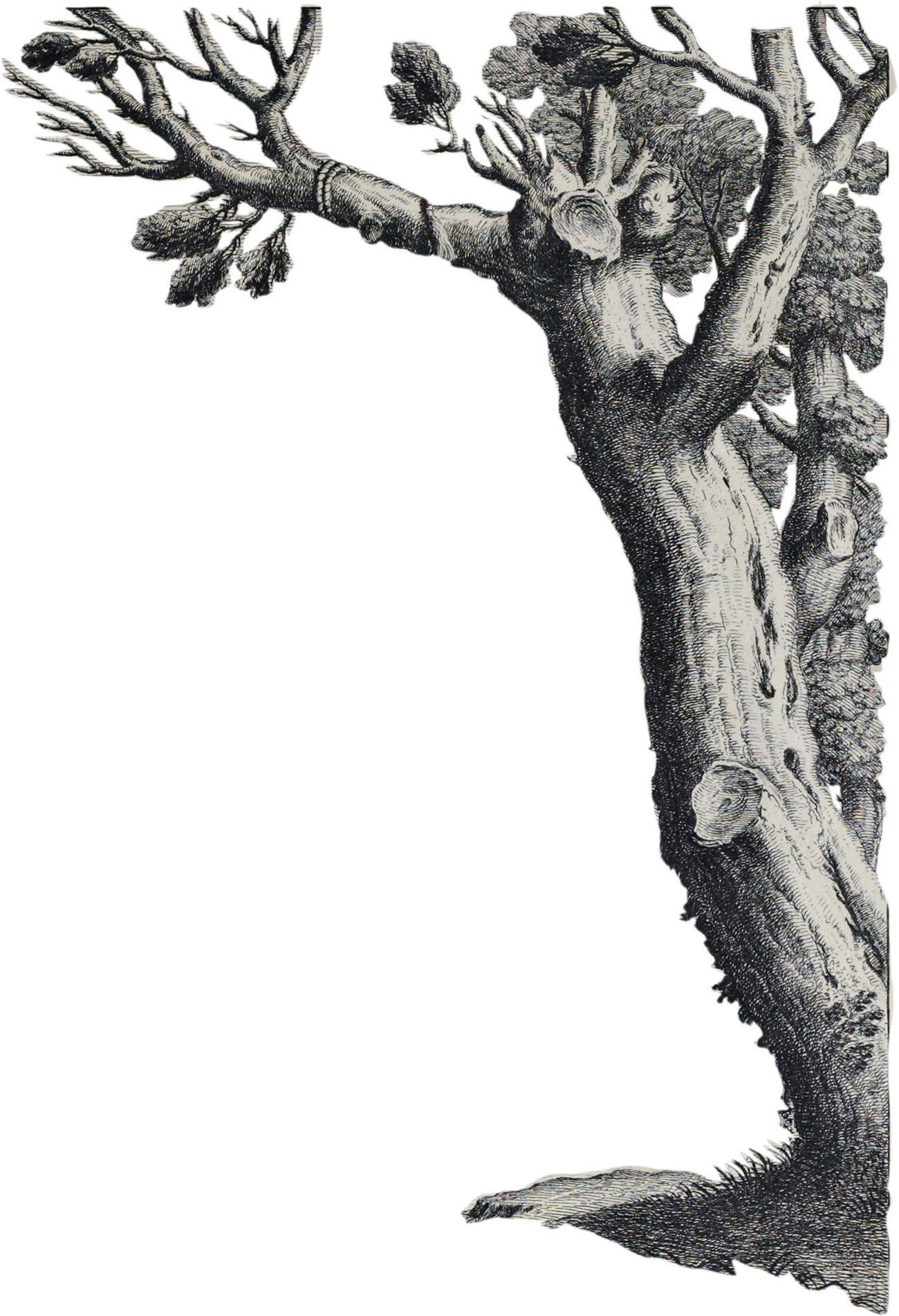 cutout of engraving of tree